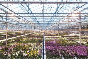 Kwekerij Ter Laak Orchids