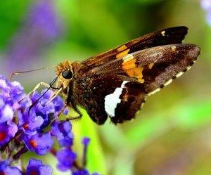 De Passiflorahoeve - Vlindertuin