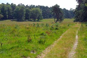 Pad in het Imbosch (Veluwezoom)